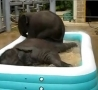 Funny Links - Baby Elephants In a Kiddie Pool