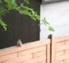 Funny Links - Squirrel Jump FAIL!