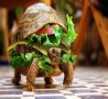 Funny Animals - Turtle Burger