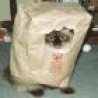 Funny Animals - Bag Cat is Watching You