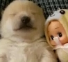 Funny Links - Puppy Talks in Its Sleep