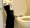 Funny Links - A Cat Flushing A Toilet