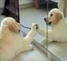 Funny Links - Puppy vs Mirror