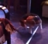 Funny Links - Beagle Catches its Tail