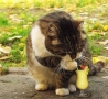 Funny Animals - Margarita Kitty