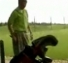 Funny Links - Awesome Golf Shot