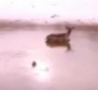 Cool Links - Helicopter Blows Deer Away