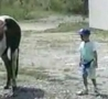 Funny Links - Never Stand Behind a Horse