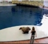 Funny Links - Walrus Dancing Michael Jackson Song