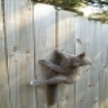 Funny Animals - Stuck Cat