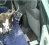 Funny Links - Moose Head in the Backseat Prank