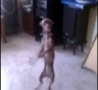 Funny Links - Dancing Dog