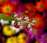 Cool Pictures - Flowers
