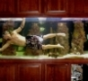 Cool Links - Aquarium Swimming