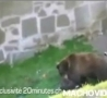 Cool Links - Bear Attacks!