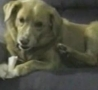 Funny Links - Dog Defends his Bone