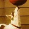 Cool Links - Dog Balances Ball On Nose