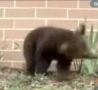 Funny Links - The Sneezing Baby Bear