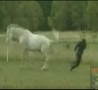 Funny Links - Horse Kick to the Face!