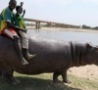 Cool Links - Riding a Hippo
