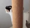 Funny Links - Cat That Moves Like a Squirrel.