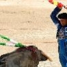 Funny Animals - Bullfighting