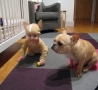 Funny Kids - Baby Matching Dog