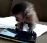 Cool Links - Baby Monkey Plays Iphone Game