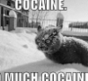 Funny Links - Cocaine Cat
