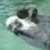 Cool Links - Otters Holding Hands