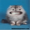 Political Pictures - Funny Mouth Cat