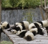Funny Animals - Bored Pandas
