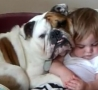 Cool Links - Bulldog Looks After Sleeping Toddler