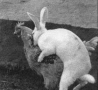 Easter Funny Pictures - Bunny Rapes