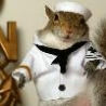 Funny Animals - Funny Squirrel Outfits