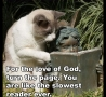 Funny Links - Cat and a Statue