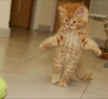 Funny Animals - Cat Can Stand