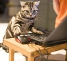 Funny Animals - Cat Computer Geek