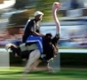 Funny Links - Ostrich Racing Gone Mad!