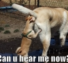 Funny Animals - Dogs Naughtiness