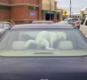 Funny Pictures - Don't Lock Dogs in Cars