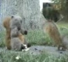 Funny Links - Attack of the Squirrel