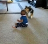Funny Links -  Dog Plays with a Laughing Baby