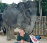 Funny Pictures - Elephant Massage