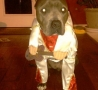 Funny Animals - Elvis Dog Costume