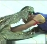Cool Links - Crazy Crocodile Stunts