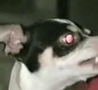 Funny Links - Another Possessed Demon Dog
