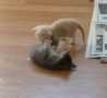 Funny Links - How to break up a kitten fight.