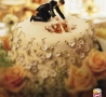 Funny Links - Fall Through Cake
