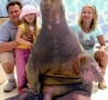 Funny Pictures - Family Photo with Walrus